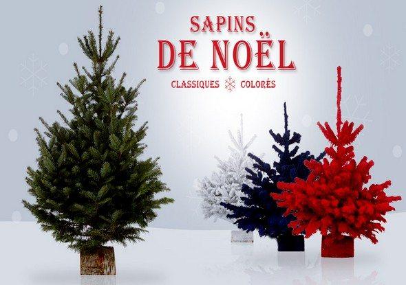 Vente privée de Sapins de Noël